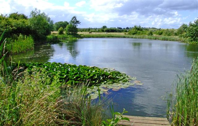 Stanwick Lakes Fisheries - The Lakes